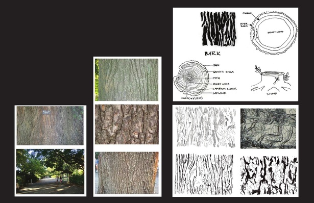 At the site there are many dienent kind of trees. Some of the trees which caught my attention are english elm, oak and cherry tree. What really interest me from the site isthe pattern of the trees. When I did the site visit I observethat how each of the tree has a dierent barkpattern . So I draw the crack of the bark pattern and made the birdhide Skin / wall out of the pattern