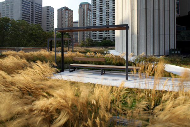 Nathan Phillips Square Podium Roof Garden Plant