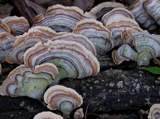Fungi