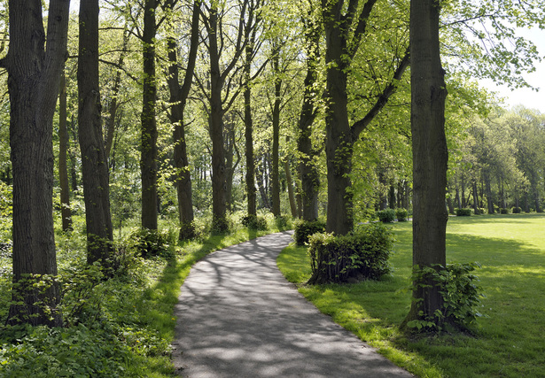 Hageveld Estate plantation