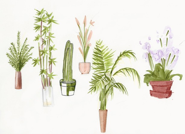 Rendered Plants I
