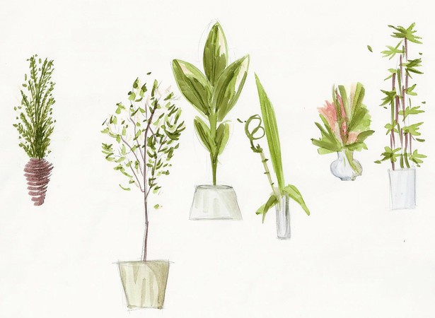 Rendered Plants II