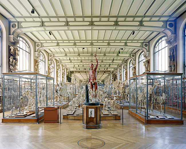 Richard Barnes, Flayed Man, Museum of Comparative Anatomy, Paris, 2005