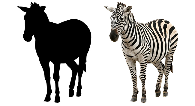 So what are you, a horse or a zebra?