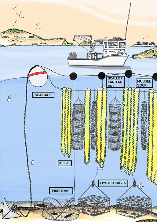 Illustration of GreenWave's 3D ocean farm concept. (Image via greenwave.org)