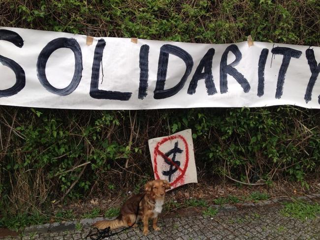 Solidarity Dog
