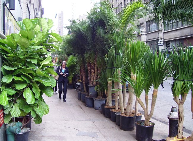 A street in the Flower District of Manhattan: 28th and 7th. Credit: Wikipedia