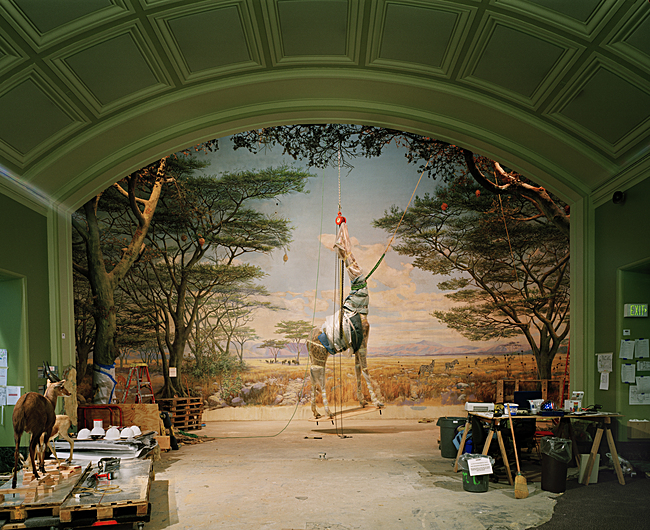 Richard Barnes, Giraffe, Academy of Science, San Francisco, 2005