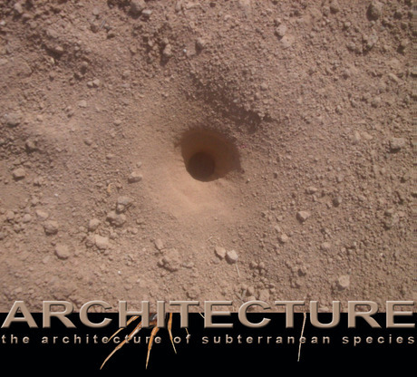 Architecture of subterranean species by J F Bautista