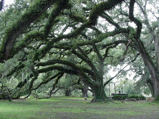 City Park in New Orleans once had three 18-hole golf courses that were damaged by Hurricane Katrina. Credit: Wikipedia