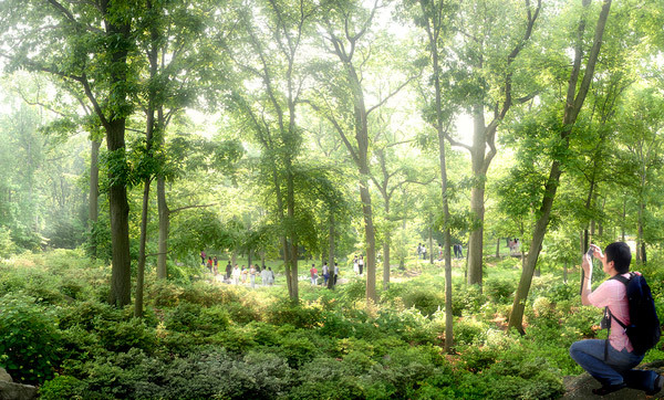 Eco Spine Park Azalea Garden © West 8 urban design & landscape architecture