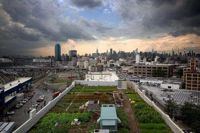 Brooklyn Grange, world's largest rooftop farm. Image via thecityatlas.org