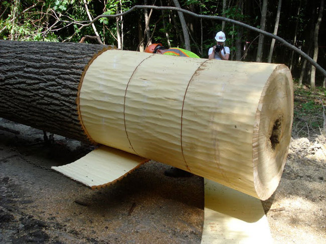 The tree was harvested and de-barked in late spring, when its sap was so wet that the bark, once scored, slides off like a peel. The bark was cut, stacked, and air-dried to make the shingles that now cover the concession stand kiosk. Courtesy Visiondivision.